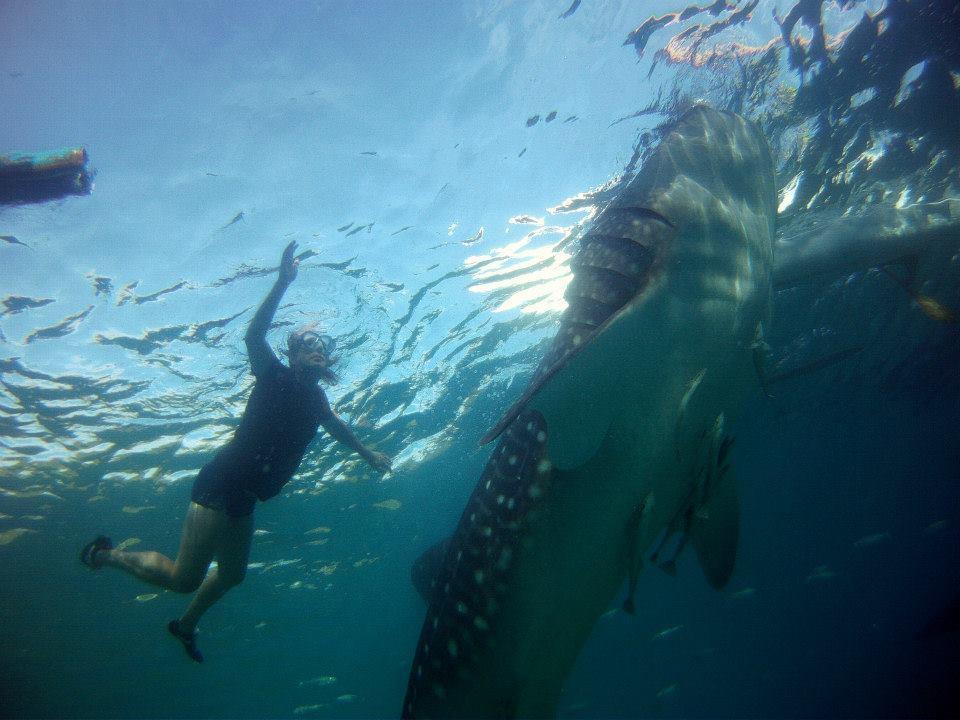 whale-shark-4-medium